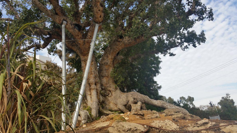 טו' בשבט במשפחה – מה בין עצים לאנשים?